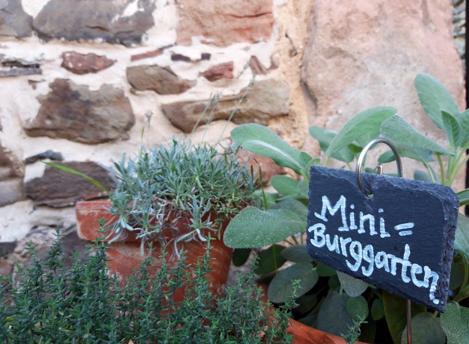 Mini-Burggarten im Burghof der Burg Posterstein - mit Lavendel, Salbei und Thymian